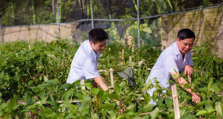 Không gian xanh, sạch cung cấp các thảo dược quý được sử dụng tại Đai Phú An