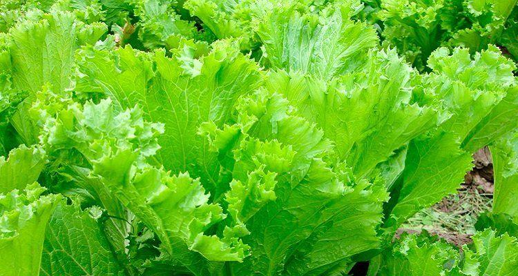 Bổ sung rau cải để tăng cường chức năng gan, giải độc gan của cơ thể. (Nguồn ảnh: Internet)