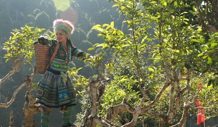 Xã Suối Giàng - quê hương của loại chè Shan Tuyết nức tiếng.