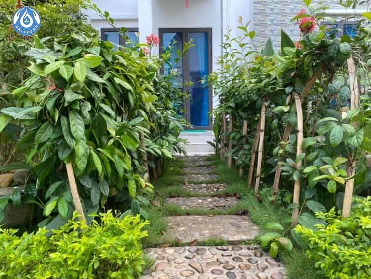 Môi trường sống xanh với nhiều cây thuốc, thảo dược quý của Khu du lịch Chăm sóc sức khỏe Đại Phú An.