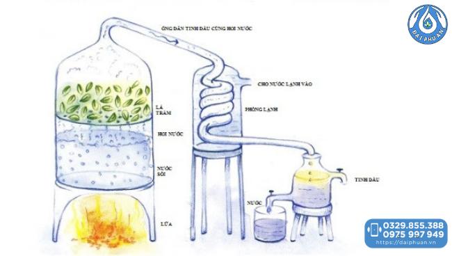 Ép lạnh trong sản xuất tinh dầu