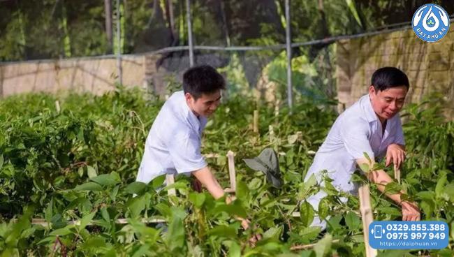 Dầu xoa bóp Đại Phú An với 100% thành phần thiên nhiên